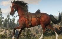 Гайд по лошадям в Red Dead Redemption 2